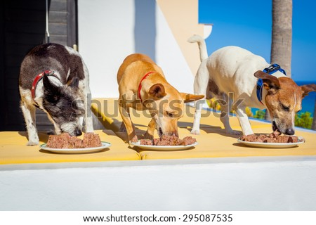 owner feeding a row of dogs with food bowls or plates, outside and outdoors, all at the same time - stock photo