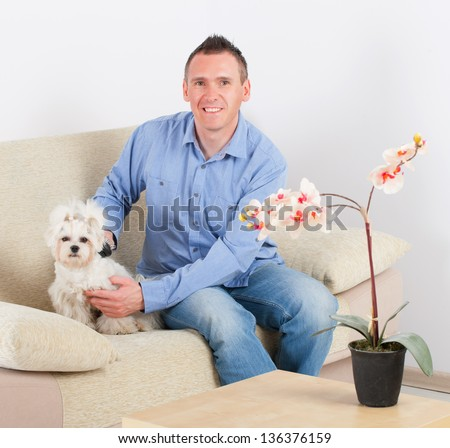 Owner of the maltese dog brushing him on the sofa in home - stock photo