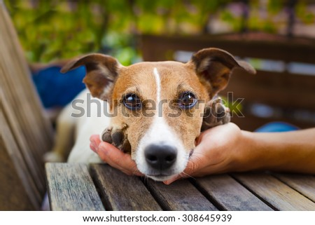 owner  petting his dog, while he is sleeping or resting  with wide open tender eyes - stock photo