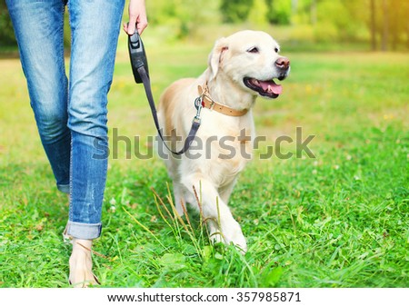 Owner walking with Golden Retriever dog together in park - stock photo