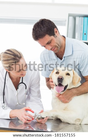 Owner with dog getting claws trimmed by female vet in clinic
