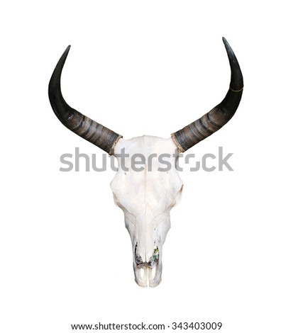 Ox bone - stock photo