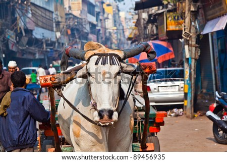 Ox cart transportation on early morning in Old Delhi, India - stock photo