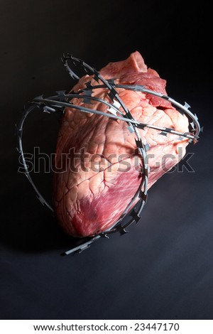 Ox Heart Wound Barbed Wire Stock Photo (Royalty Free) 23447170 ...