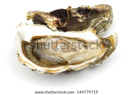 Oyster isolated on white background - stock photo