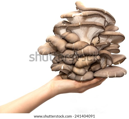 oyster mushrooms in a hand on a white background - stock photo
