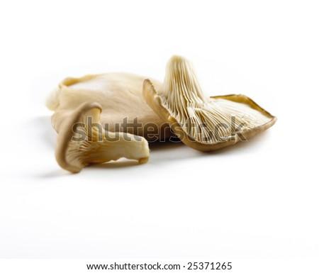 Oyster Mushrooms isolated on white background - stock photo