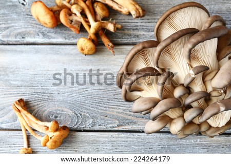 Oysters and honey mushrooms on the boards, fresh food - stock photo