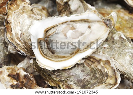 Oysters background macro close up - stock photo