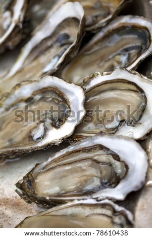 Oysters in a plate - stock photo