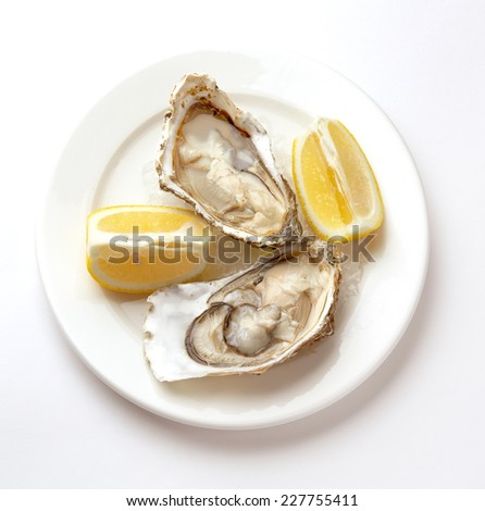 Oysters in ice on a white plate - stock photo