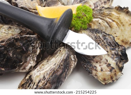 Oysters knife with oysters isolated on white - stock photo