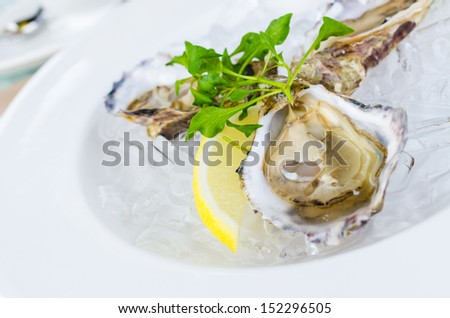Oysters with lemon - stock photo