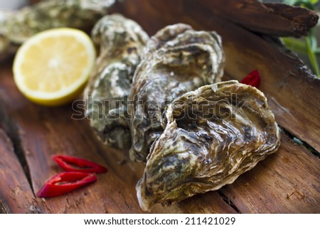 Oysters with lemon and chili pepper on the wooden background - stock photo