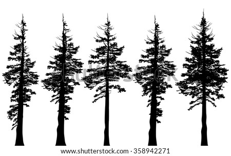 Pacific northwest old growth evergreen tree silhouette set - stock photo