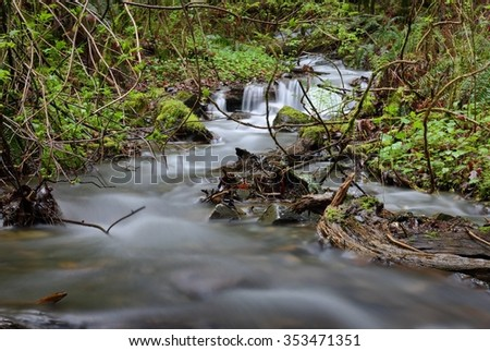 Pacific Northwest Rainforest Rushing Creek. An rushing mountain stream in a Pacific Northwest rainforest. United States.  - stock photo