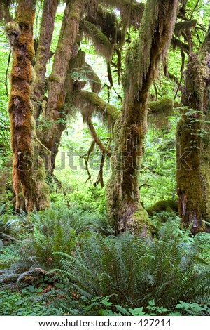 Pacific Rainforest, Olympic National Park, WA - stock photo