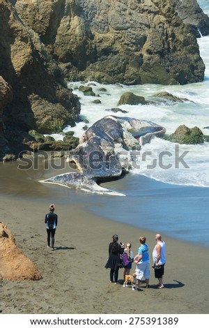 PACIFICA, CA - April 18: Curious onlookers view a 50-foot Sperm Whale discovered on April 14. Earlier scientist performed a necropsy. Taken at Sharp Park State Beach in Pacifica, CA on April 18, 2015 - stock photo