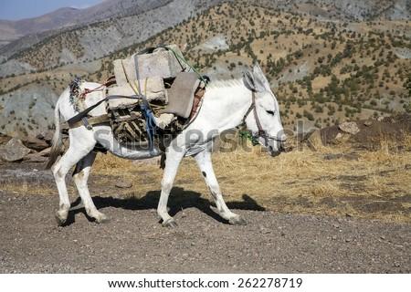 Pack horse - stock photo