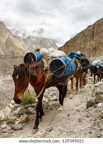 Pack Horses in the Karakorum Mountains, Pakistan - stock photo