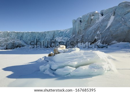 Pack ice in front of glacier ending in sea.
