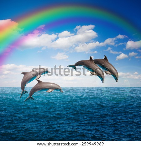 pack of  of jumping dolphins,beautiful seascape with rainbow with deep  ocean  waters and cloudscape - stock photo
