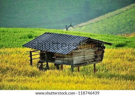 Paddy and hut - stock photo