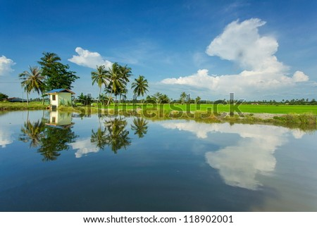Paddy field and beautiful sky background - stock photo