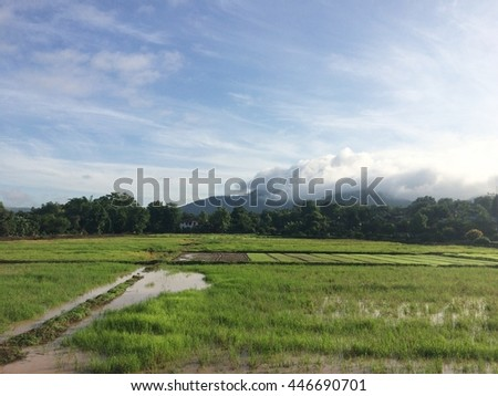 Paddy field and young rice tree against blue sky - stock photo