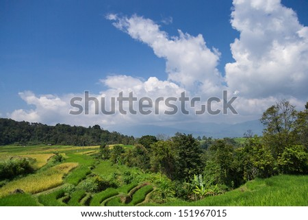 paddy field in a rural village in Batu Sangkar, West Sumatera, Indonesia.