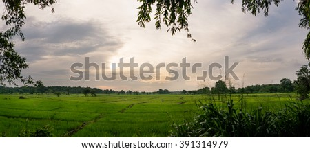 Paddy Field in Sri Lanka - stock photo