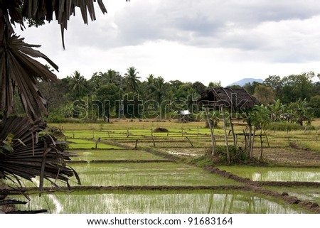 Paddy fields and banana palms. A typical view of northern Sri Lankan countryside. Farmers keep watch for wild elephants from the huts on stilts. - stock photo