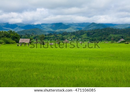 Paddy fields and huts in countryside, Thailand