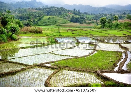 Paddy fields, mountains soft and blur, India - stock photo