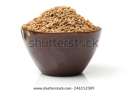 paddy grains on white background - stock photo