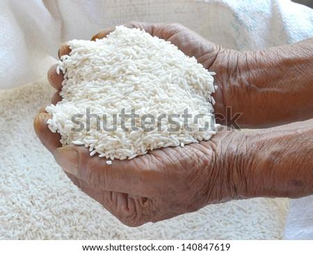 Paddy in farmer hand - stock photo