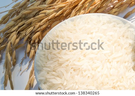paddy rice,brown rice,white rice - stock photo
