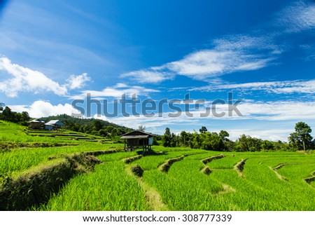 paddy rice fields of agriculture plantation, Chiangmai in Thailand - stock photo
