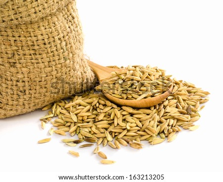 paddy rice seed in a  Burlap sack. - stock photo