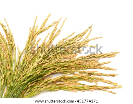 paddy rice seed isolate on a white background