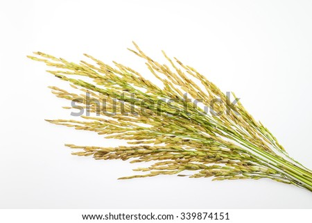 paddy rice seed on white background. - stock photo