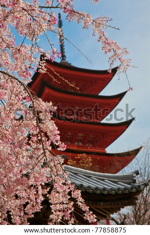 Pagoda with cherry blossom