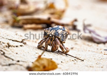 pagurian on sand beach - stock photo