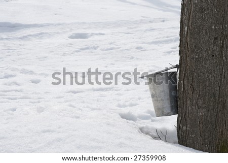Pail for collecting maple sap attached to a tree, and lots of snow around. - stock photo