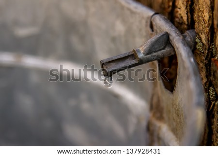 Pails hang from Maple Trees collecting sap for maple syrup production at Swine Creek Park. A close up of a Maple Tap with a drop of sap on the end. - stock photo
