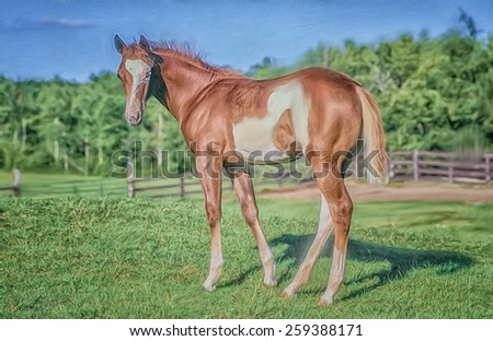Paint horse colt portrait - stock photo
