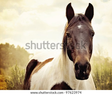 Paint Horse Pasture Stock Photo 97623974 - Shutterstock