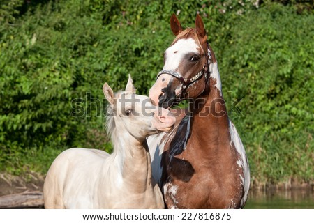 Paint horse mare with sweet foal - stock photo