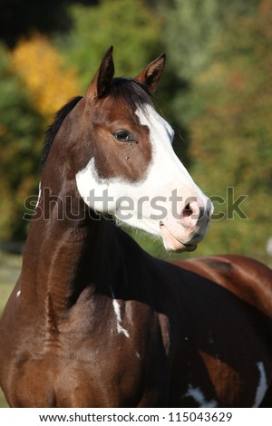 Paint horse with beautiful bald spot - stock photo