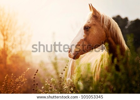Paint Mare at Dusk in Field - stock photo